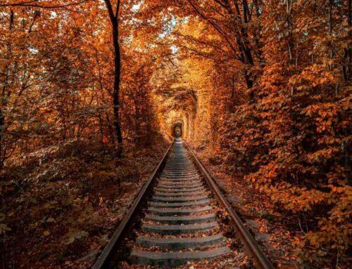 Il Treno del Foliage, la ferrovia panoramica più bella d'Italia a due passi da Milano