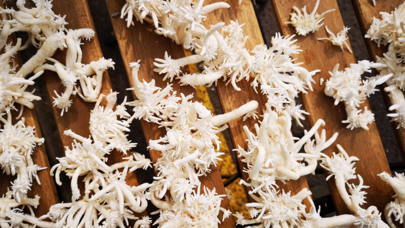 Mycelium-fungi-growths