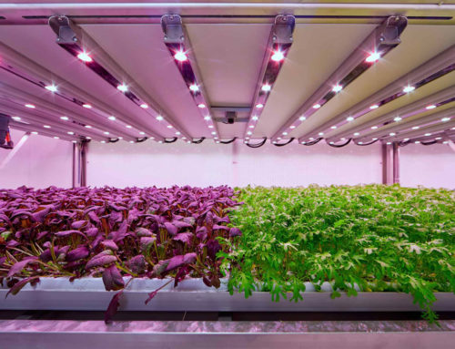 Planet Farms, agricoltura e innovazione tecnologica alle porte di Milano